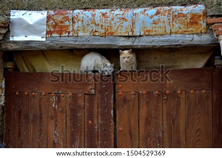 cats climbed under an old, old door.
