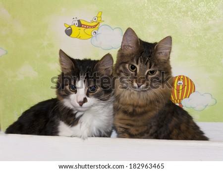 Cats cute couple animal kitty photo. Housecats friends.