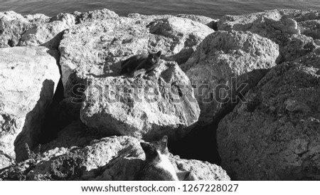 Cats dozing off in the sun.  Black and white sea wall