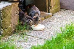 Cats eating from a plate