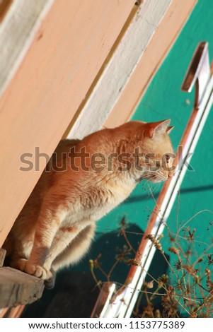 cats, feline, animals #1153775389