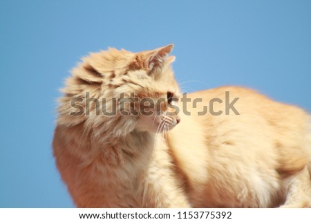 cats, feline, animals #1153775392