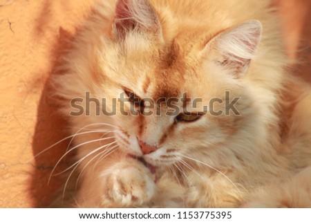 cats, feline, animals #1153775395