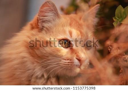 cats, feline, animals #1153775398