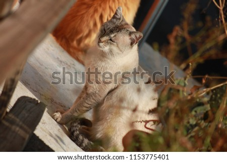 cats, feline, animals #1153775401
