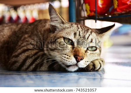 Photo of Cats furry cute