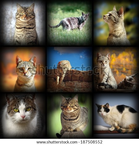 cats images collection, nine pictures of different pets with added vignette