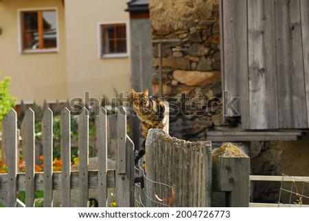 Cats in Guarda landscape, Switzerland Foto stock ©