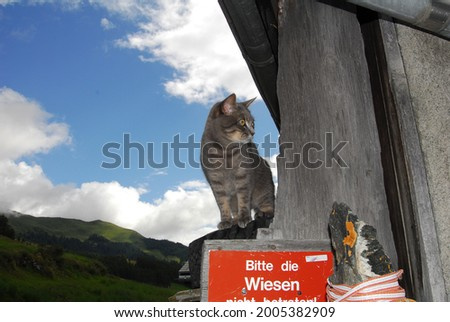 Cats in Guarda landscape, Switzerland [translation of red board]Please do not enter the meadows! Foto stock ©