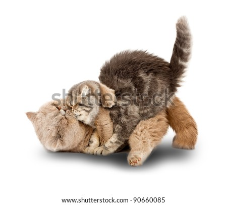 Cats kissing each other's arms on a white background