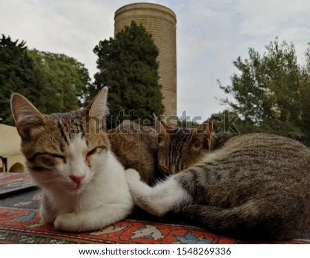 Cats live with people asleep nice with some nice way