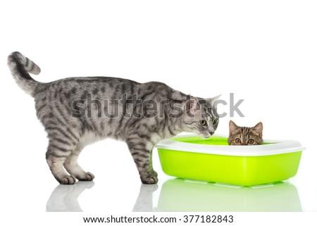 cheap cat neutering nj