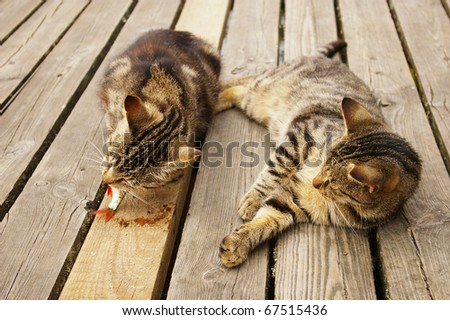 cats on a pier