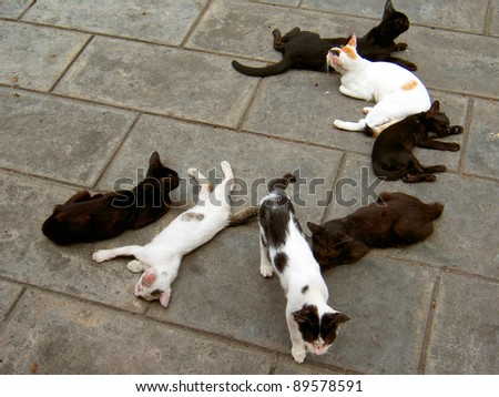Cats on a street in Bangkok, Thailand.