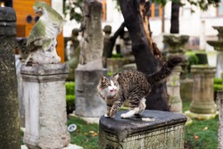 Cats on the details of ancient architecture in front of the archaeological museum in Istanbul