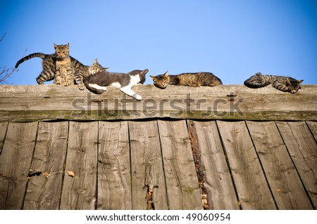 Cats on the wooden roof