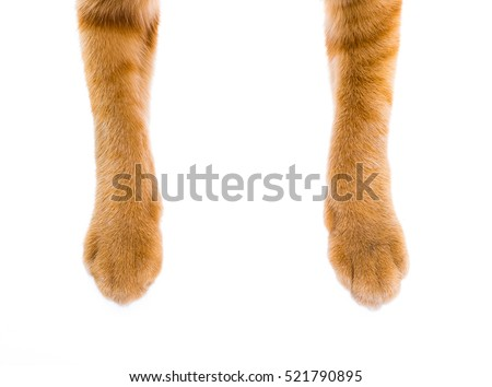 cats paw isolated on white background