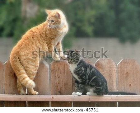 Cats relaxing on a fence
