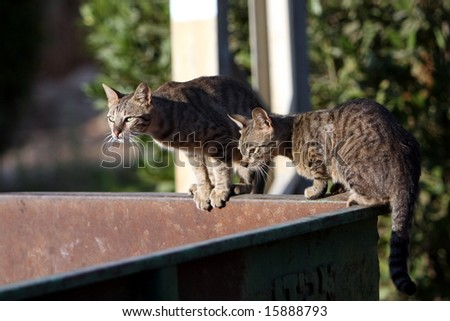 Cats Sit on Trash Receptacle - stock photo