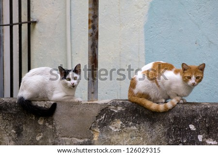 Cats sitting on a stone wall