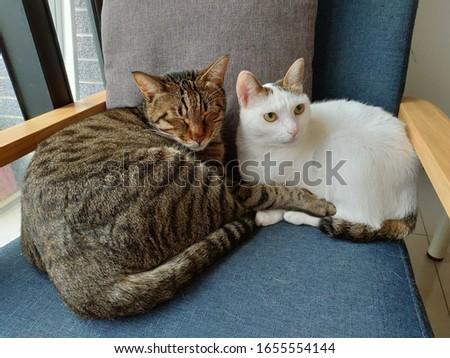 Cats sitting on cozy sofa