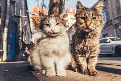 Cats sitting on the street.