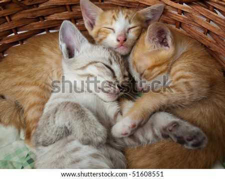 Cats sleeping in the basket