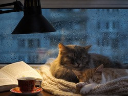 Cats sleeping in the window. Outside, rain, water drops on the glass. Twilight, included a desk lamp. It should be a cup with a drink, it is an open book. Cozy and warm
