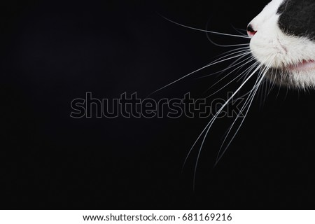Cats whiskers - Shutterstock ID 681169216