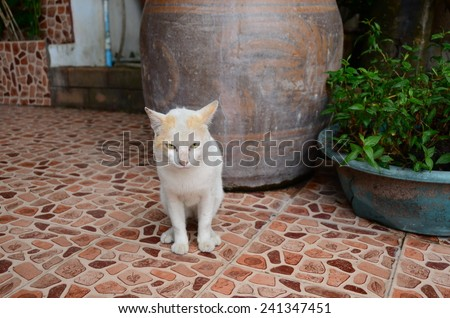 cats white background cats cute animal face portrait