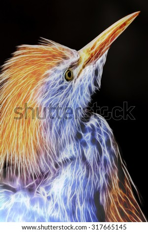 Shutterstock Cattle Egret Wild Bird Neon Effect Abstract Closeup Portrait
