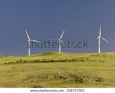 Cattle graze on a pasture with three wind turbines in the background on a beautiful sunny day with blue sky. This is near the southern most point of the United States, South Point, Big Island, Hawaii.