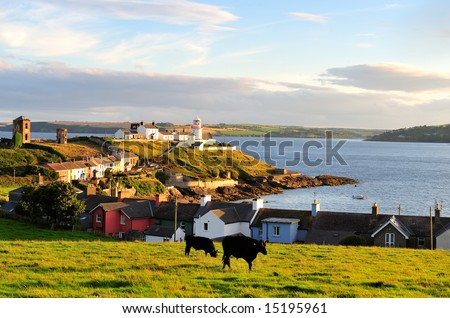 cattle grazing in field, near Roches Point Lighthouse, Co.Cork, Ireland