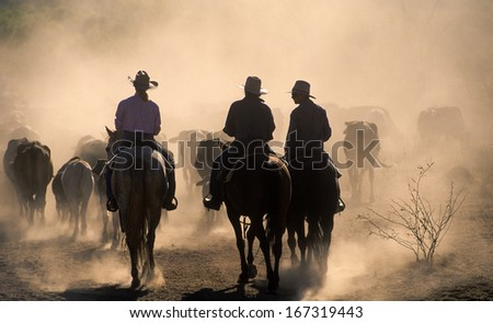 Cattle Mustering In The Dust Of Western Queensland.