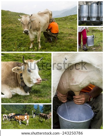 cattle on the field collage