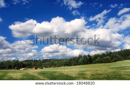 Cattle on the meadow