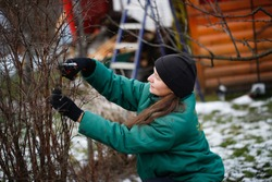 Caucasian beautiful woman gardener prunes branches with pruning shears, winter pruning of plants, gardening in winter