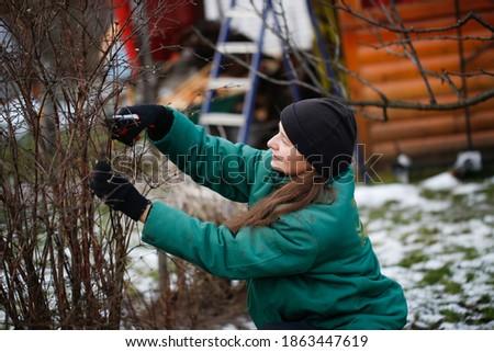Caucasian beautiful woman gardener prunes branches with pruning shears, winter pruning of plants, gardening in winter Stockfoto ©