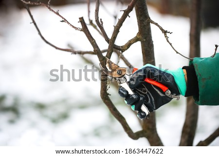 Caucasian cute woman gardener with garden tool close up, gardener pruning branches with pruning shears, winter plant pruning, winter gardening work in winter work clothes Stockfoto ©