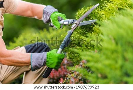Caucasian Gardener in His 40s Trimming Plants Using Professional Commercial Grade Garden Scissors. Spring Time Backyard Garden Plants Maintenance. ストックフォト ©