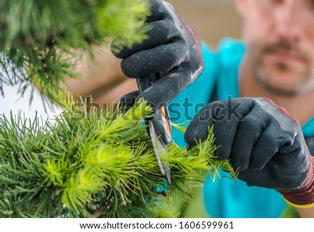 Caucasian Gardener Wearing Safety Gloves Trimming Decorative Garden Tree. Agriculture and Gardening Industry.