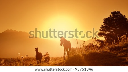 Caucasian wild horses - stock photo