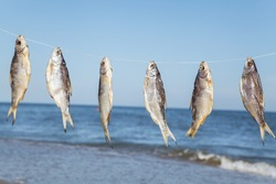 Caught fish hanging and drying on a rope on the beach at summer day