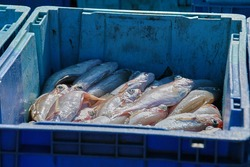Caught fish in blue boxes