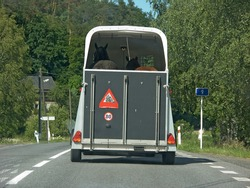 Cautious safe transportation of horses in a cart pulls of car on a summer road from rear view.