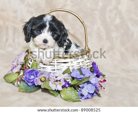 CAVACHON PUPPY SITTING IN A BASKET WITH PURPLE FLOWERS.