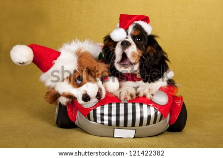 Cavalier King Charles Spaniel puppies with santa hats and jackets sitting in soft toy car - stock photo