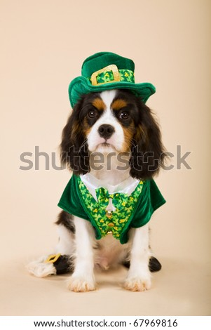 Cavalier puppy in St Patrick Day leprechaun outfit