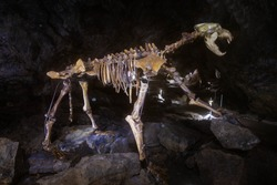 cave bear skeleton in a cave