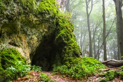 Cave in foggy forest
